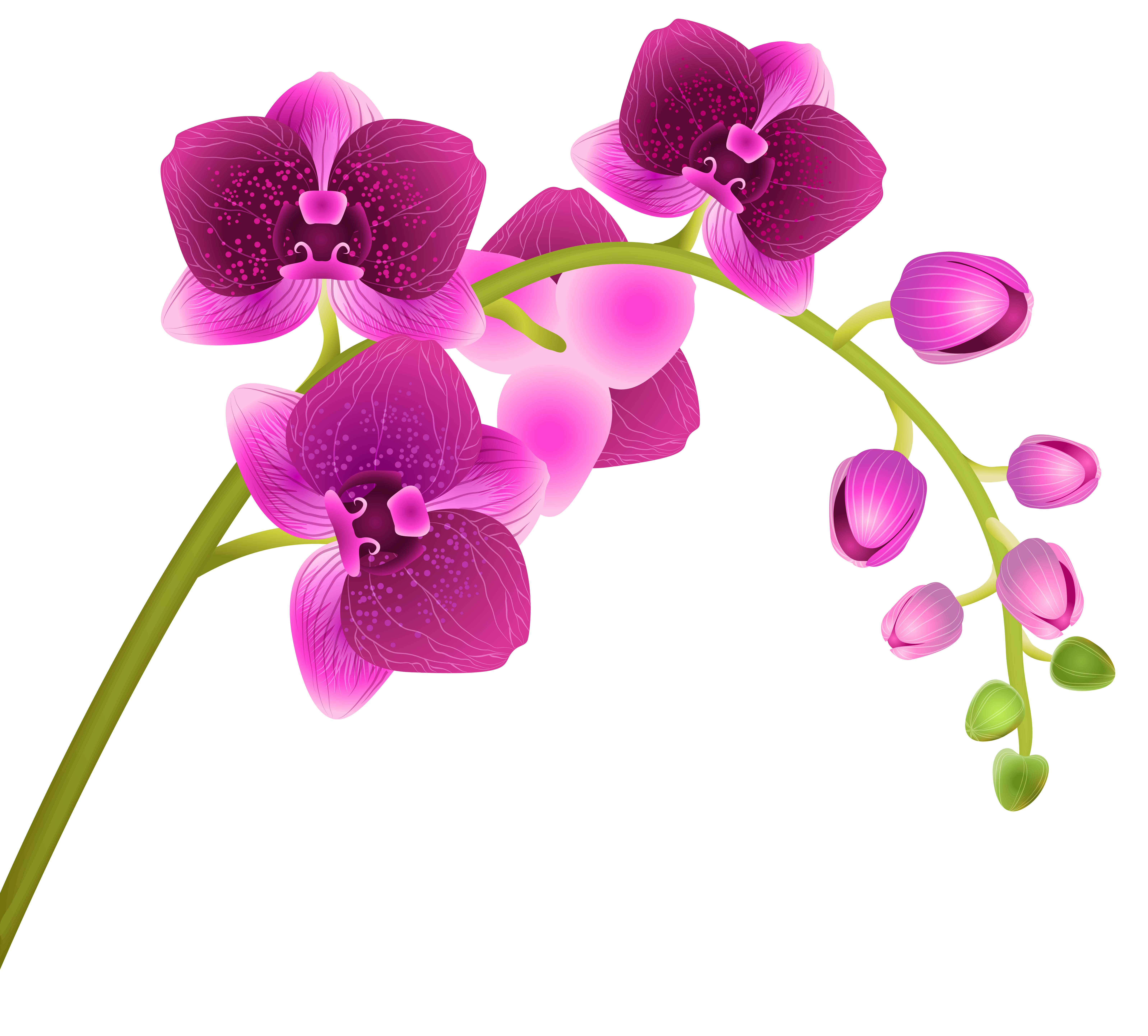 svg library stock Orchid clipart. Free cliparts download clip