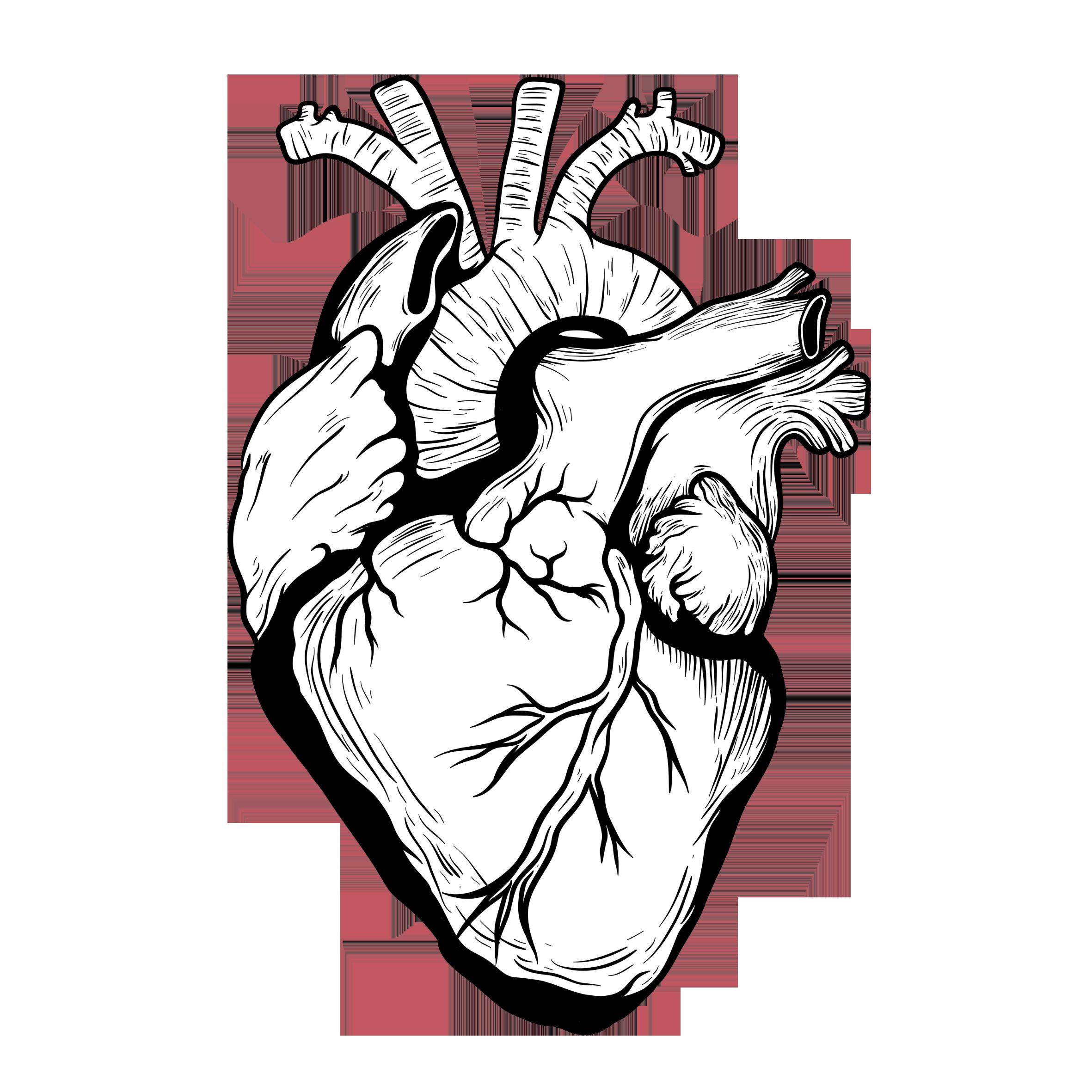 image royalty free stock Heart Drawing Organ Designer