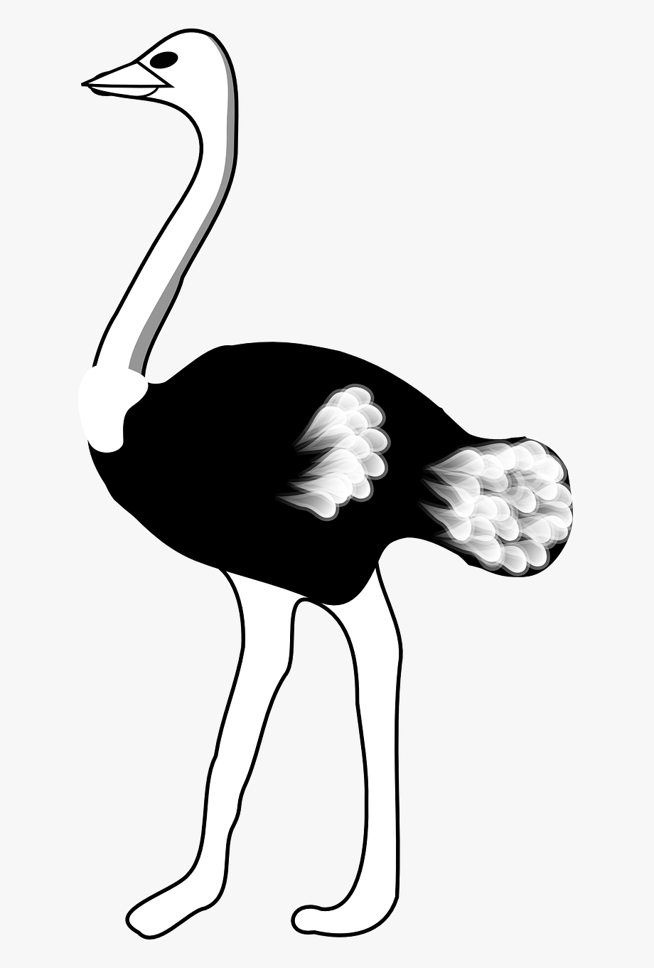 vector library stock Ostrich clipart black and white. Free cliparts on clipartwiki