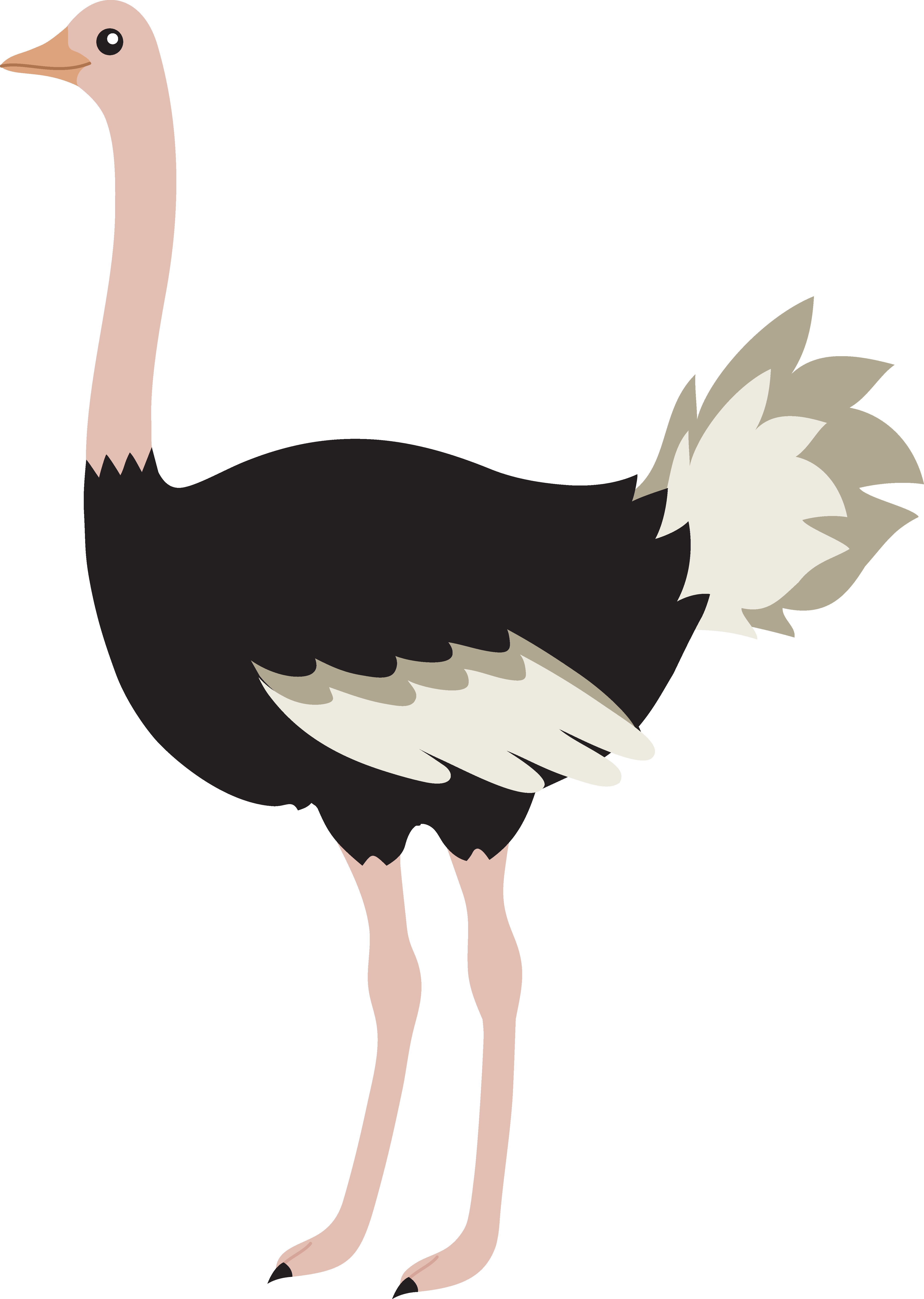 clipart royalty free download Cute Cartoon Ostrich Images