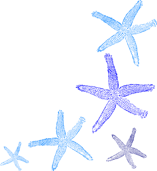 svg freeuse stock Outline clipart starfish. Border free on dumielauxepices