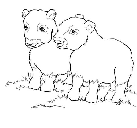 picture transparent library Musk Ox Babies coloring page