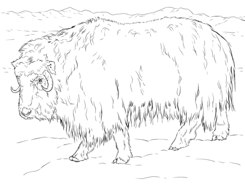 clip black and white stock Realistic Musk Ox coloring page