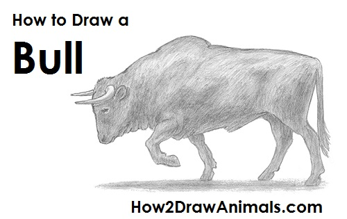 clip art royalty free stock How to Draw a Bull