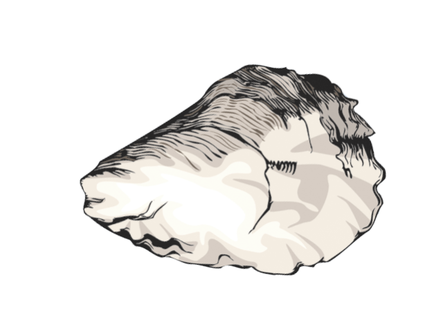 image black and white Oyster clipart. Graphic design shells shell