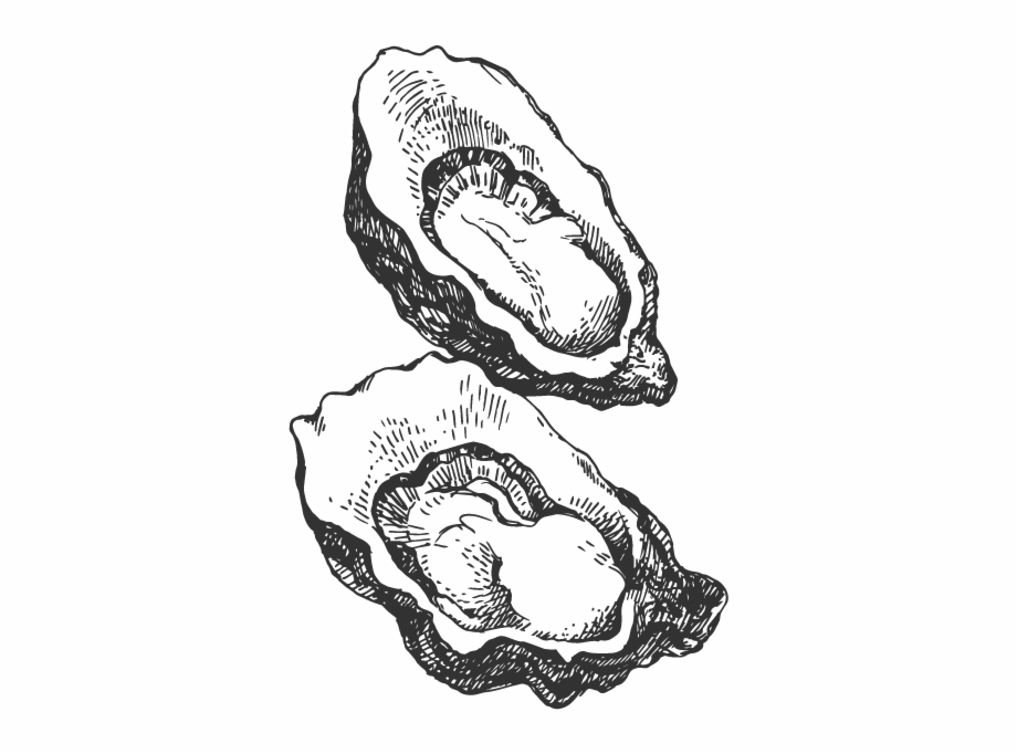 svg library Drawing of an png. Oyster clipart black and white.