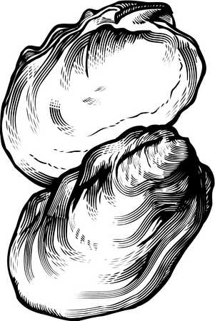 clip art transparent stock Oyster clipart black and white. Stock illustration a drawing.