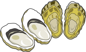 image transparent library Oyster