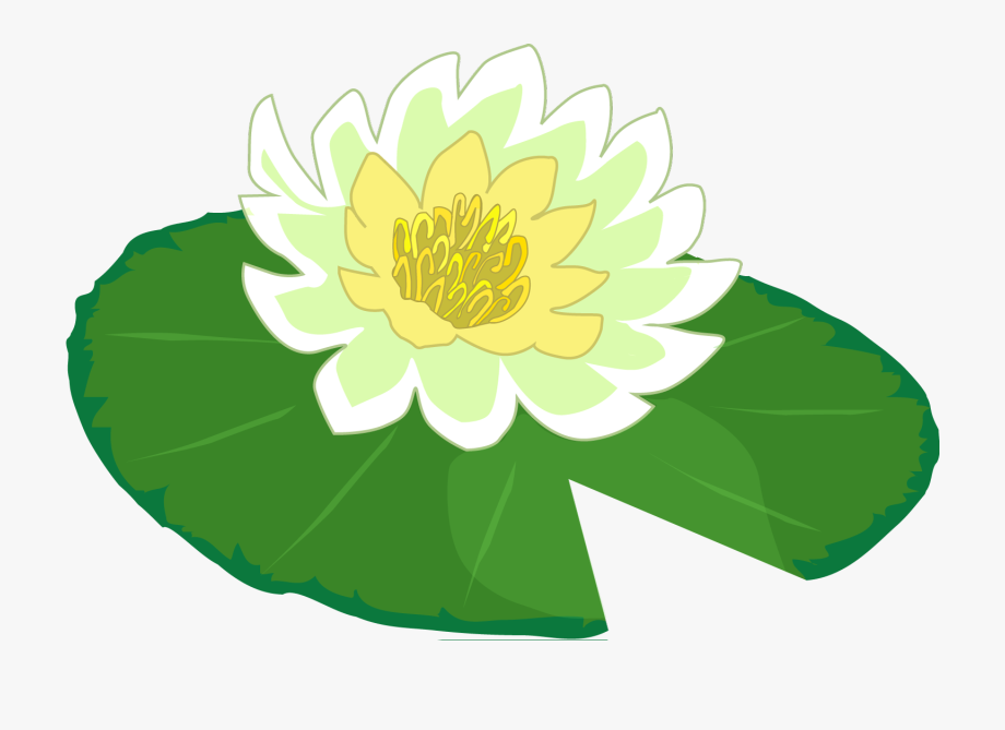 clipart transparent stock White flower water lily. Pad clipart cartoon