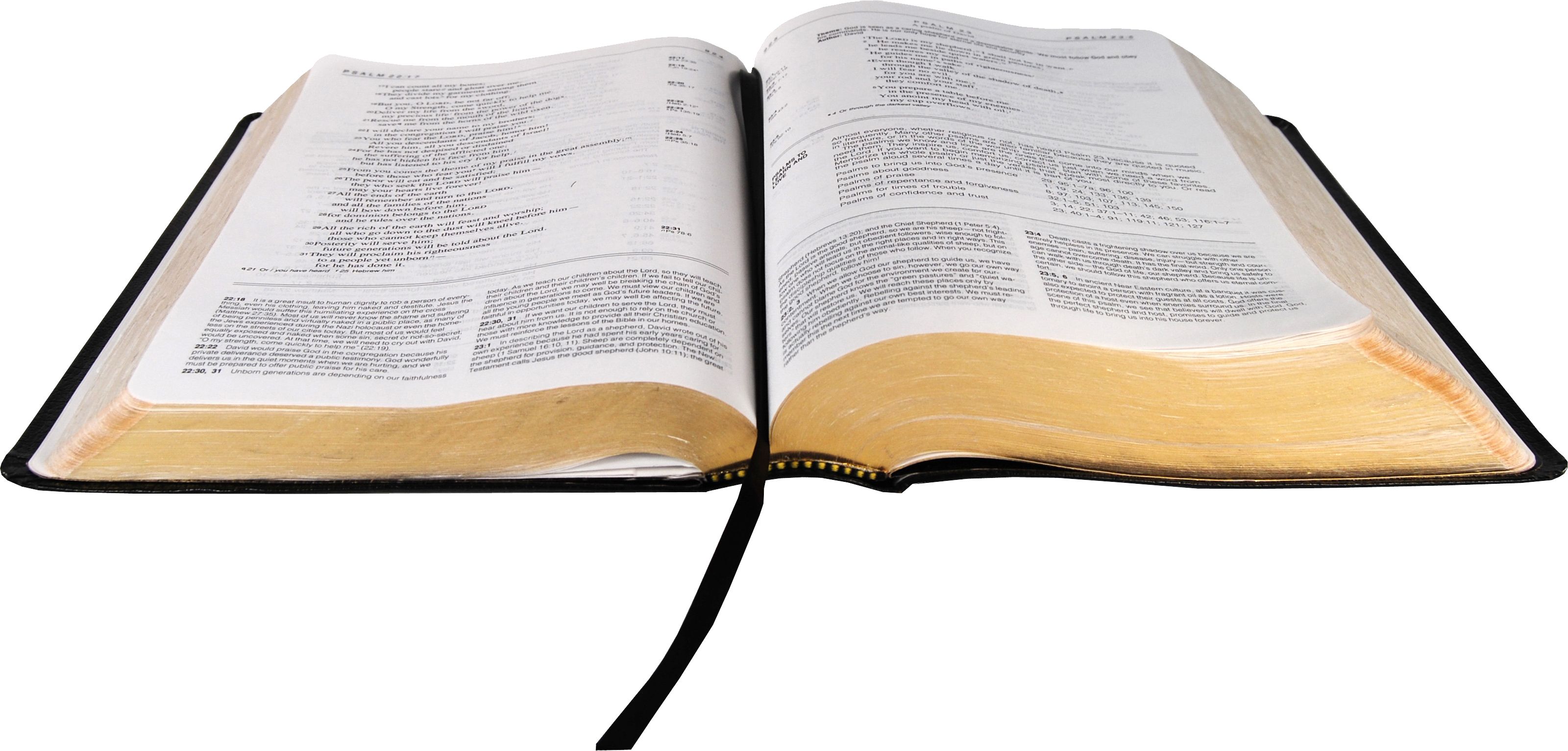 vector library open bible PNG