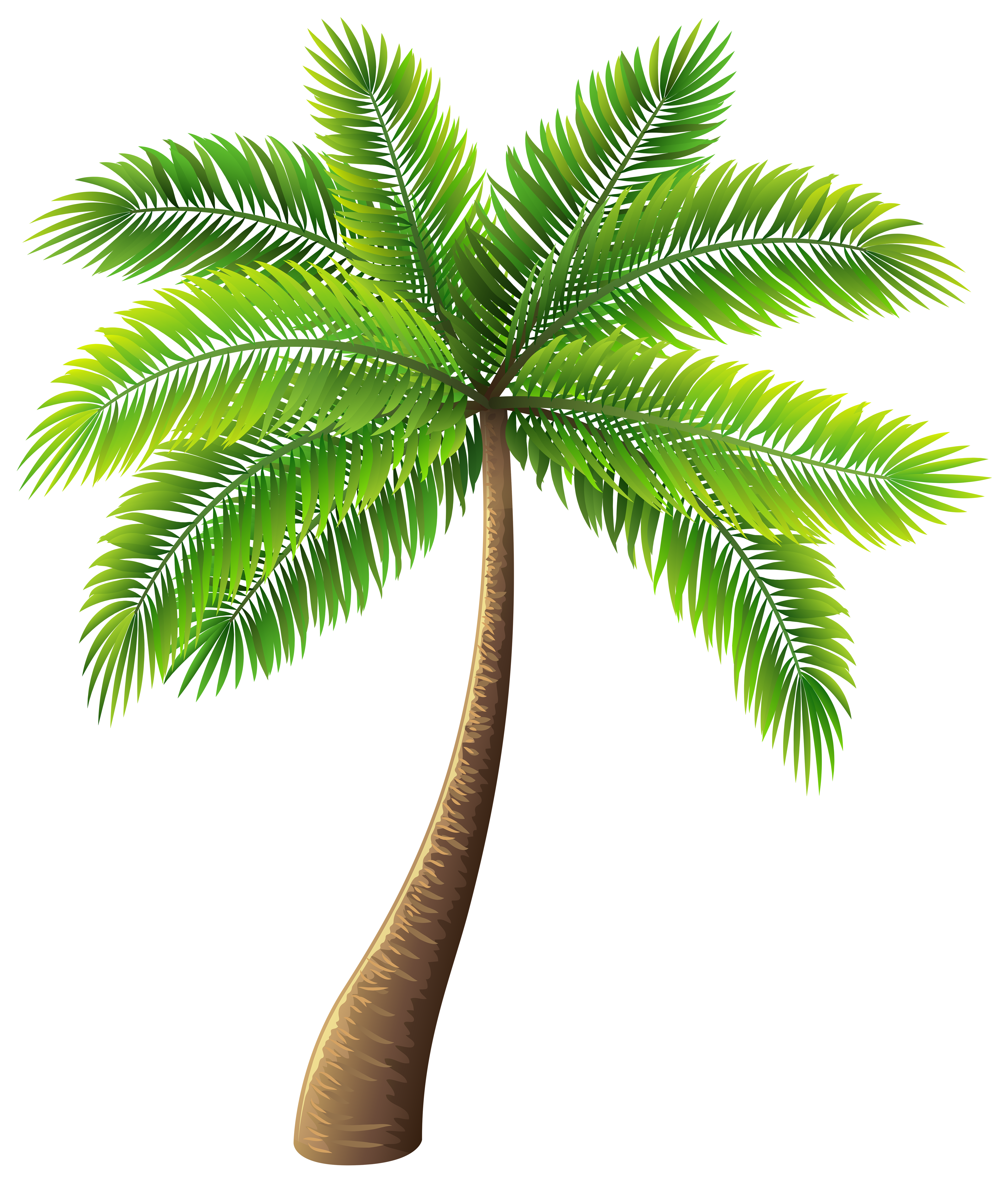 image library download Palm clipart. Tree png clip art.
