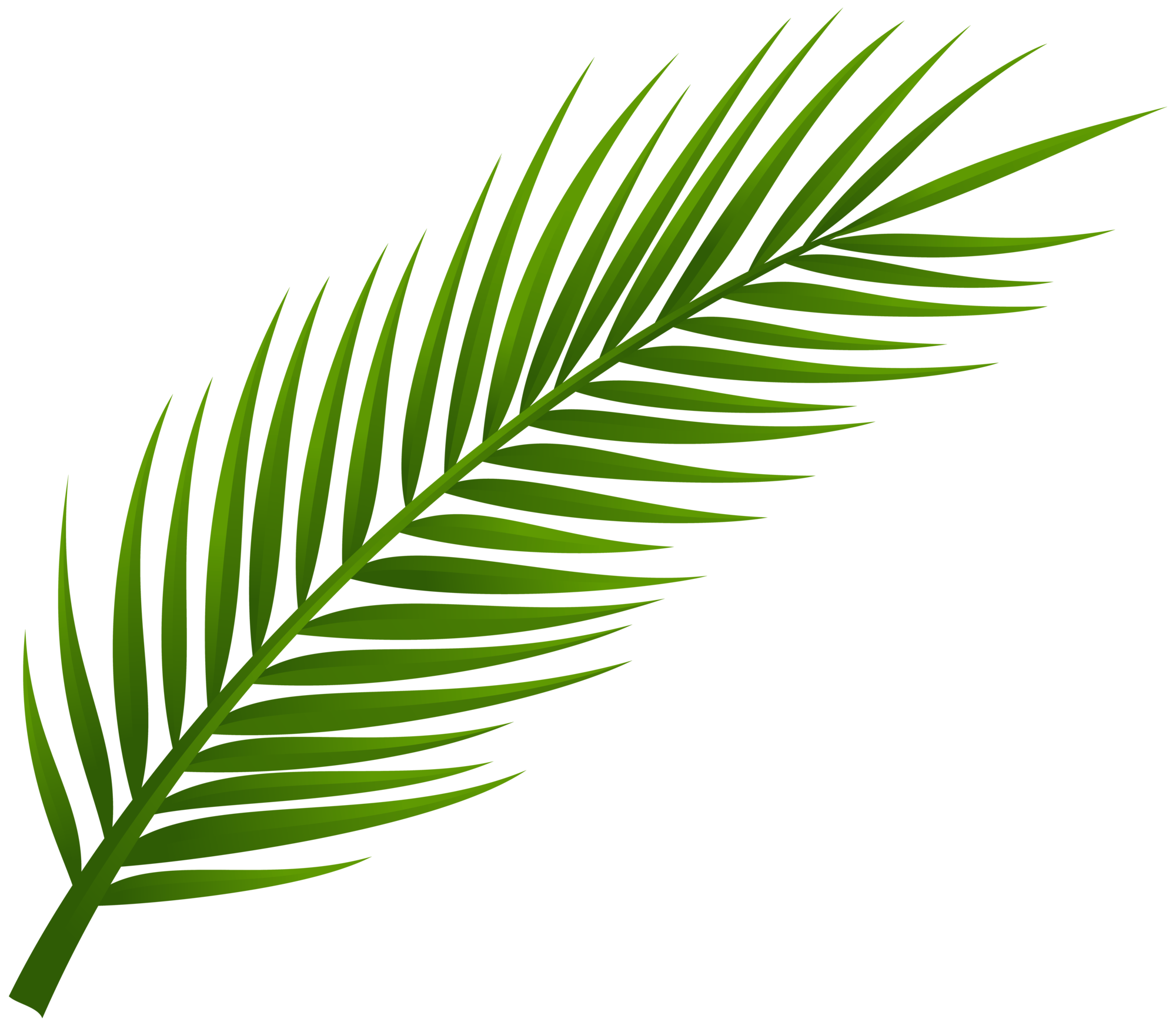clip art transparent library Tree leaf png clip. Palm clipart.