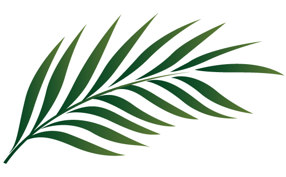 picture transparent palm clipart palm branch image free cliparts that you can download