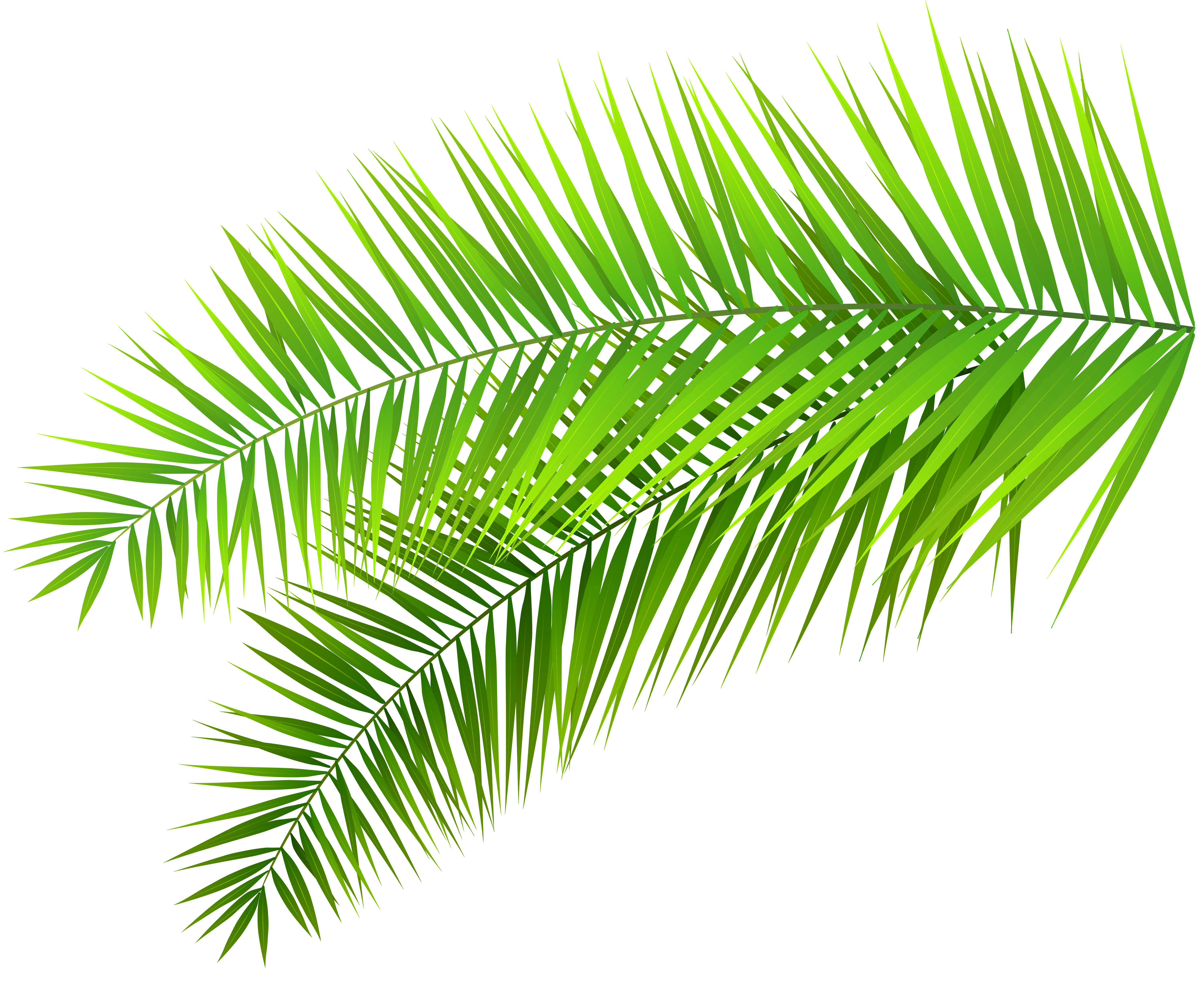 vector royalty free download Palm clipart. Leaves decoration png clip.