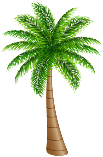 banner free Palm clipart. Tree large png clip.