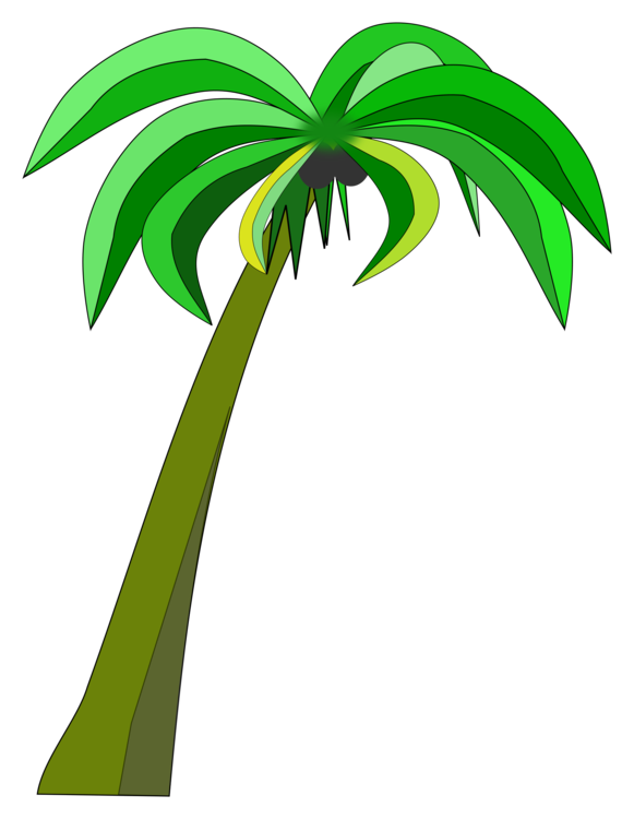 banner transparent stock Trees coconut can stock. Palm drawing.