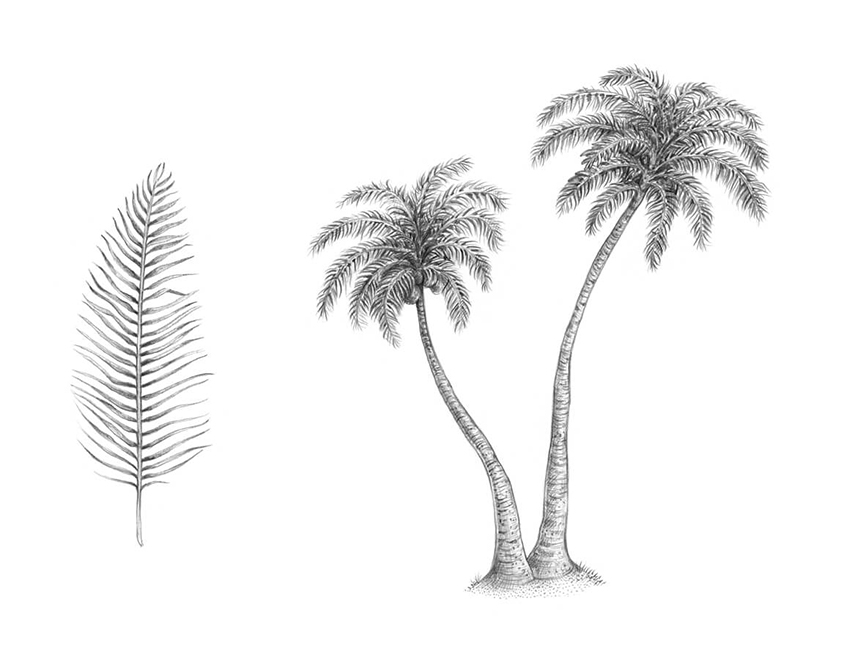 jpg royalty free How to draw a. Palm drawing