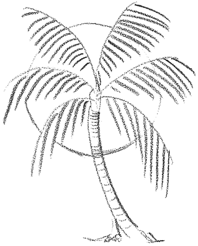 clip art freeuse download How to draw trees. Palm drawing