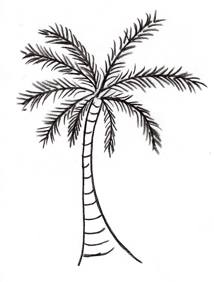 vector royalty free stock Palm drawing. Tree art starts for