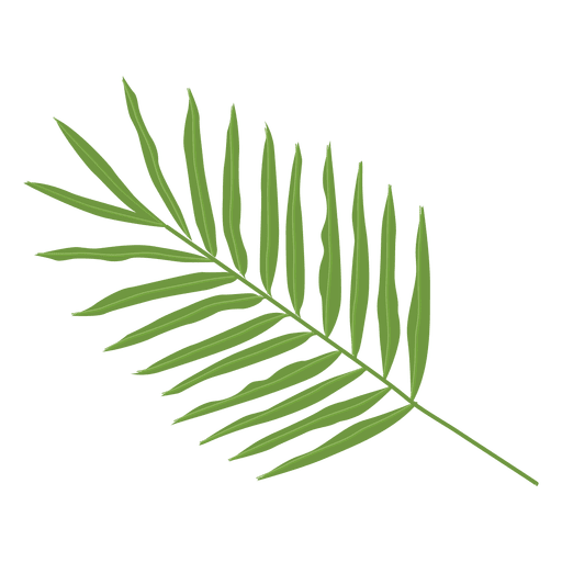 image download Areca palm leaf illustration