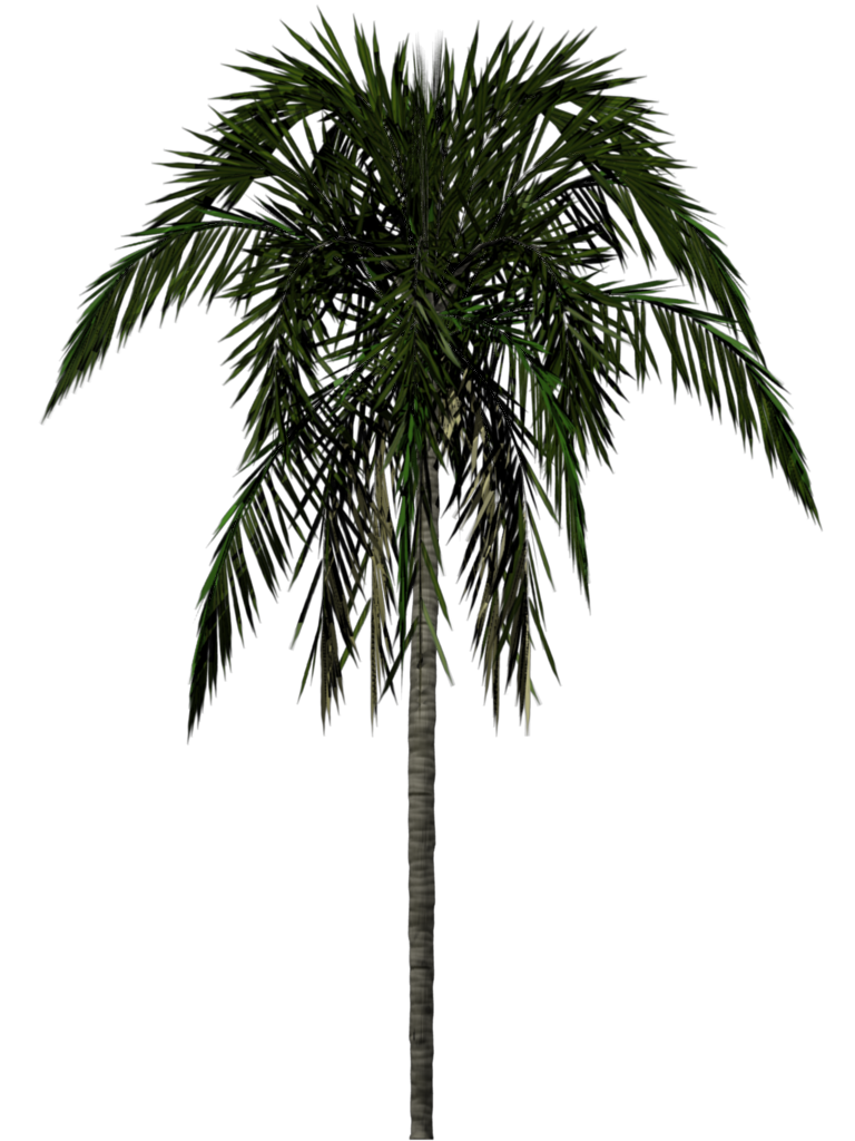 vector royalty free Desert trees png