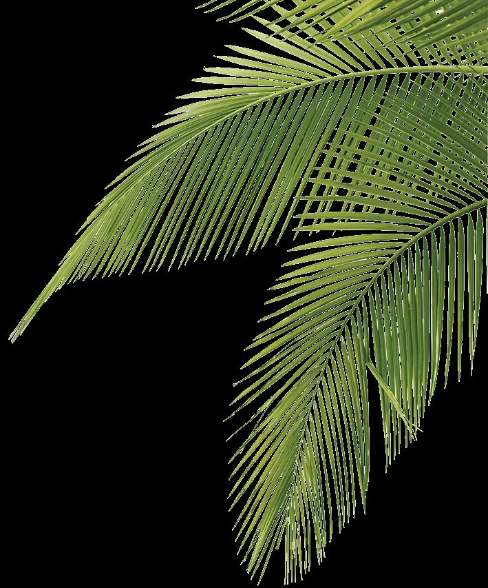 jpg freeuse download palm drawing frawn #100800645