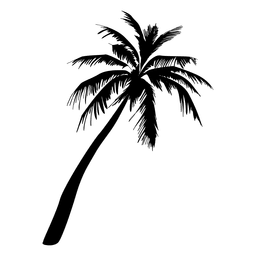 vector stock Palm tree silhouette illustration