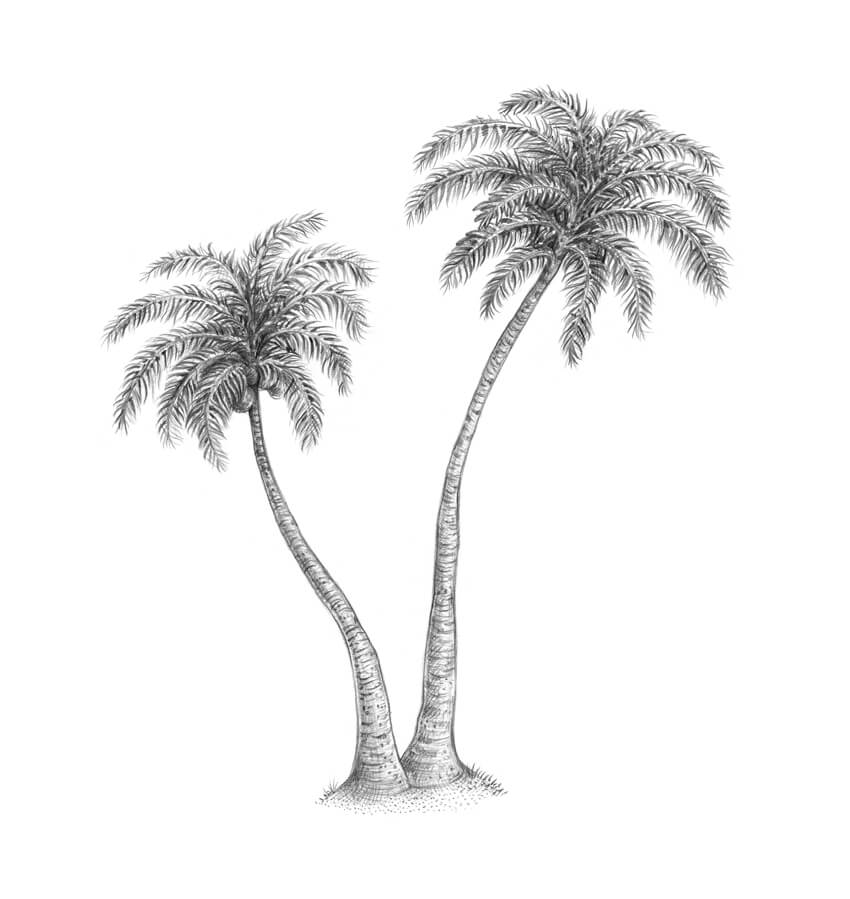 jpg royalty free Palm drawing. How to draw a