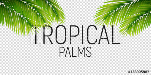 png freeuse library Palms vector. Tropical trendy palm leaves.