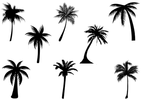 image transparent library Free palm trees download. Palms vector.
