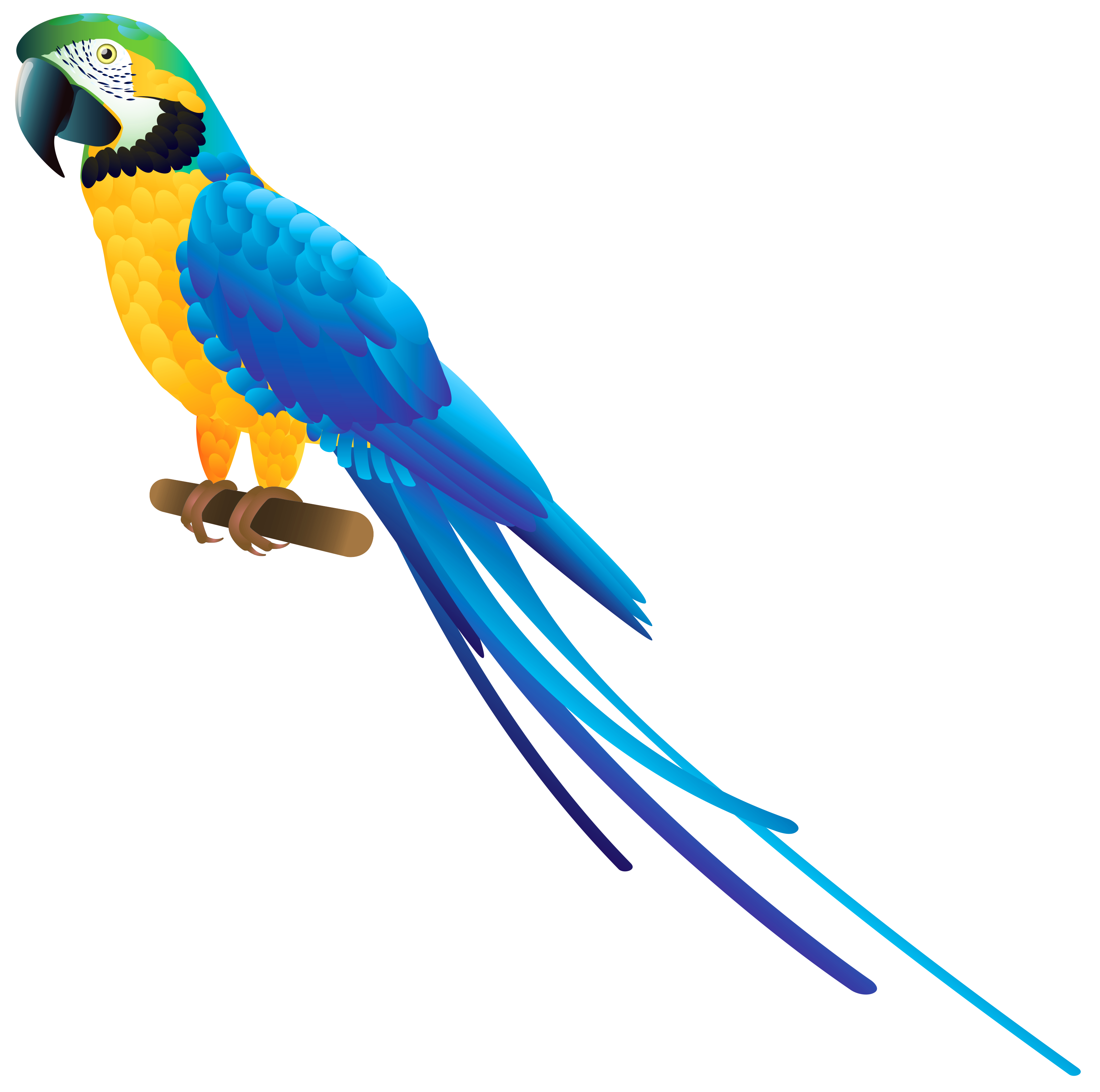 clip art black and white library Parrot clipart. Blue png best web.