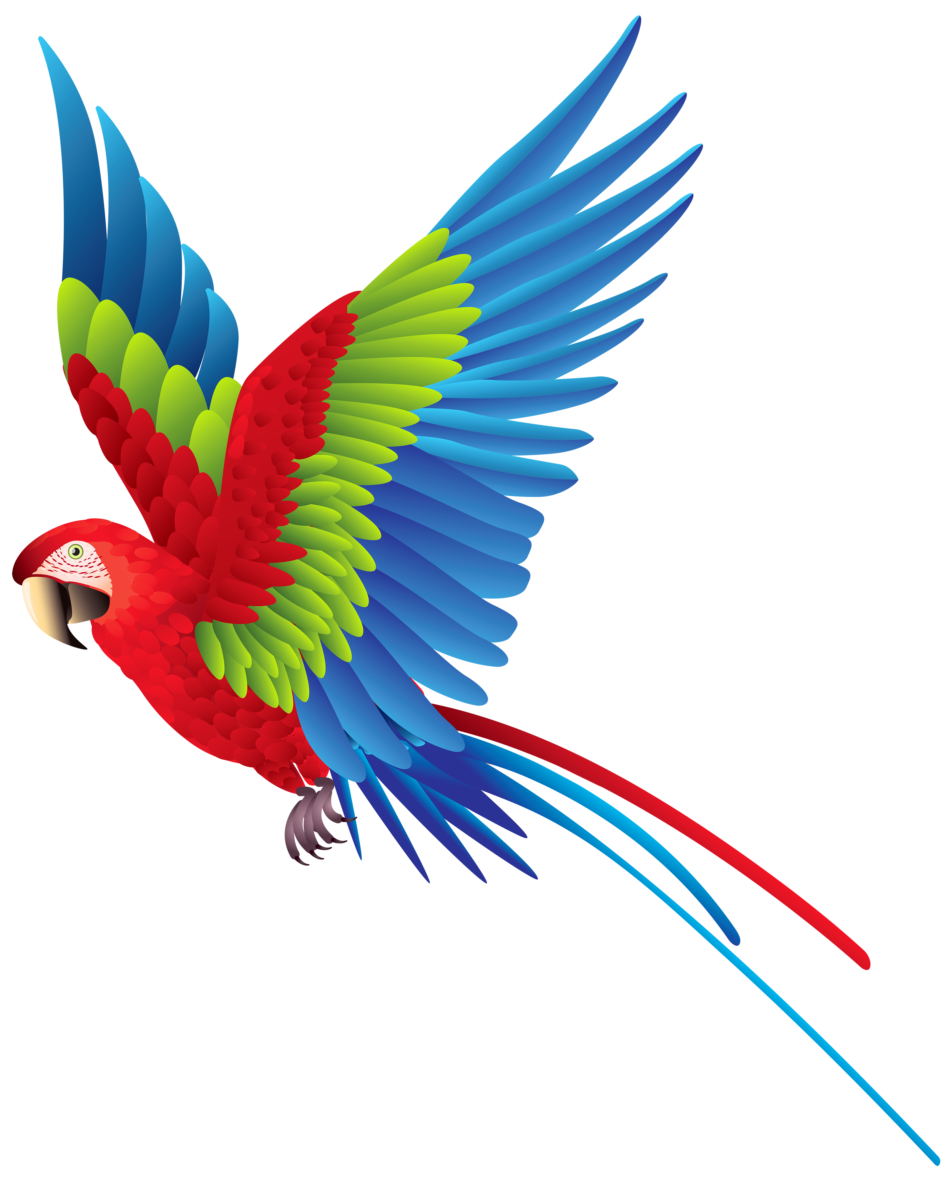 image download Colourful png best web. Parrot clipart.