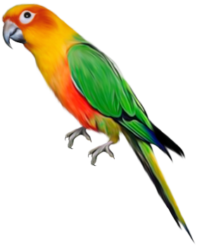 vector free library Gallery yopriceville high quality. Parrot clipart.