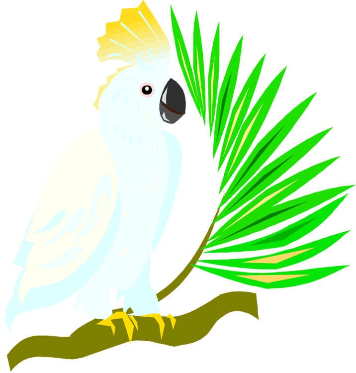 jpg download Free and macaw. Parrot clipart.