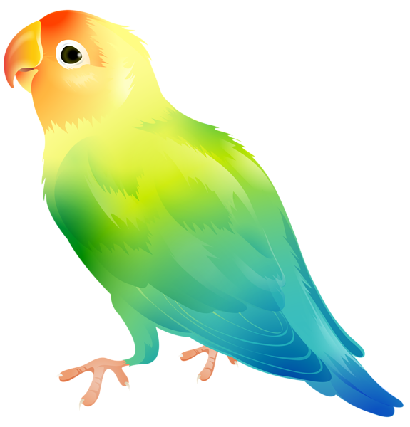 image library stock Parrot clipart. Bird png clip art