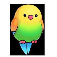 image tropical bird