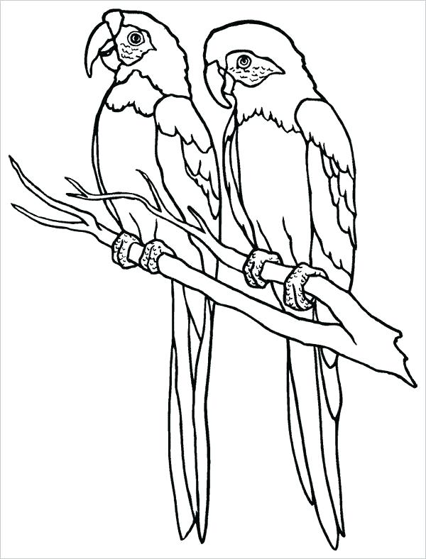 jpg library stock Parrots drawing family. Simple parrot free download