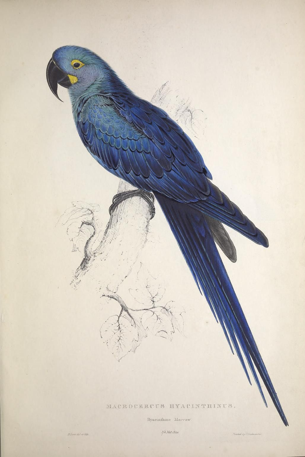 jpg freeuse library Pin on natural art. Parrots drawing family