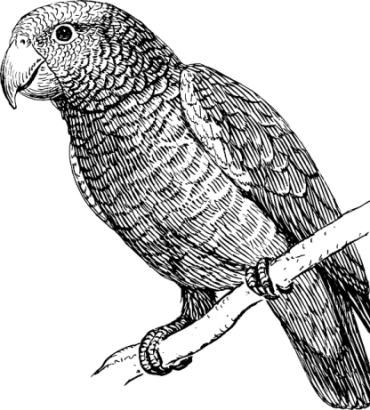 png library download How to draw a. Drawing charcoal bird