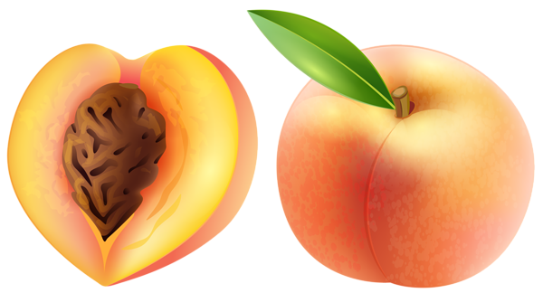 image library stock peach clipart peach clipart peachclipart fruit clip art photo