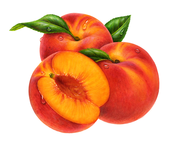 clip library download Free download on webstockreview. Peaches clipart