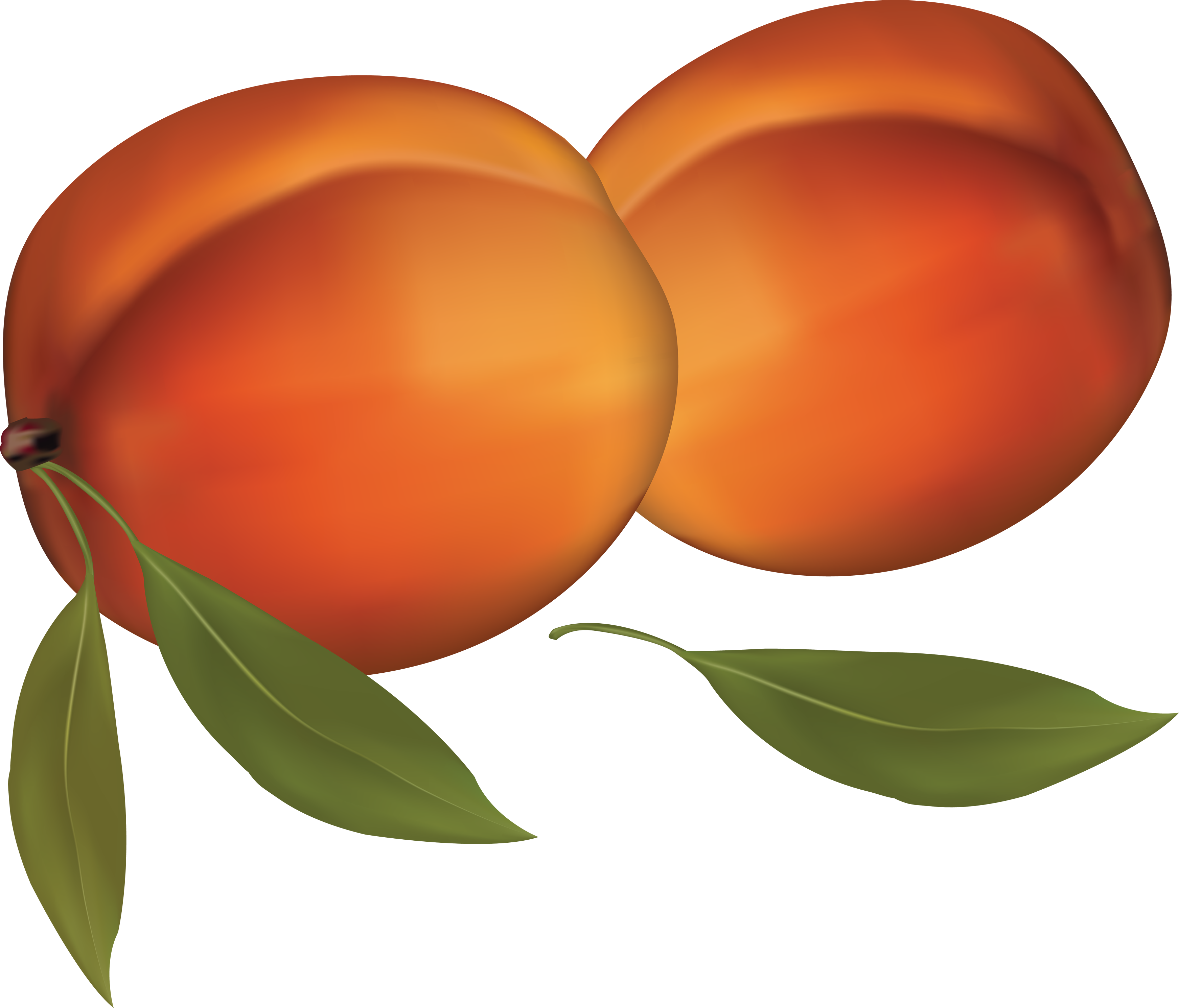png stock Peach png image purepng. Peaches clipart