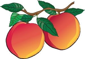 jpg free download Nectarines image fresh or. Peaches clipart