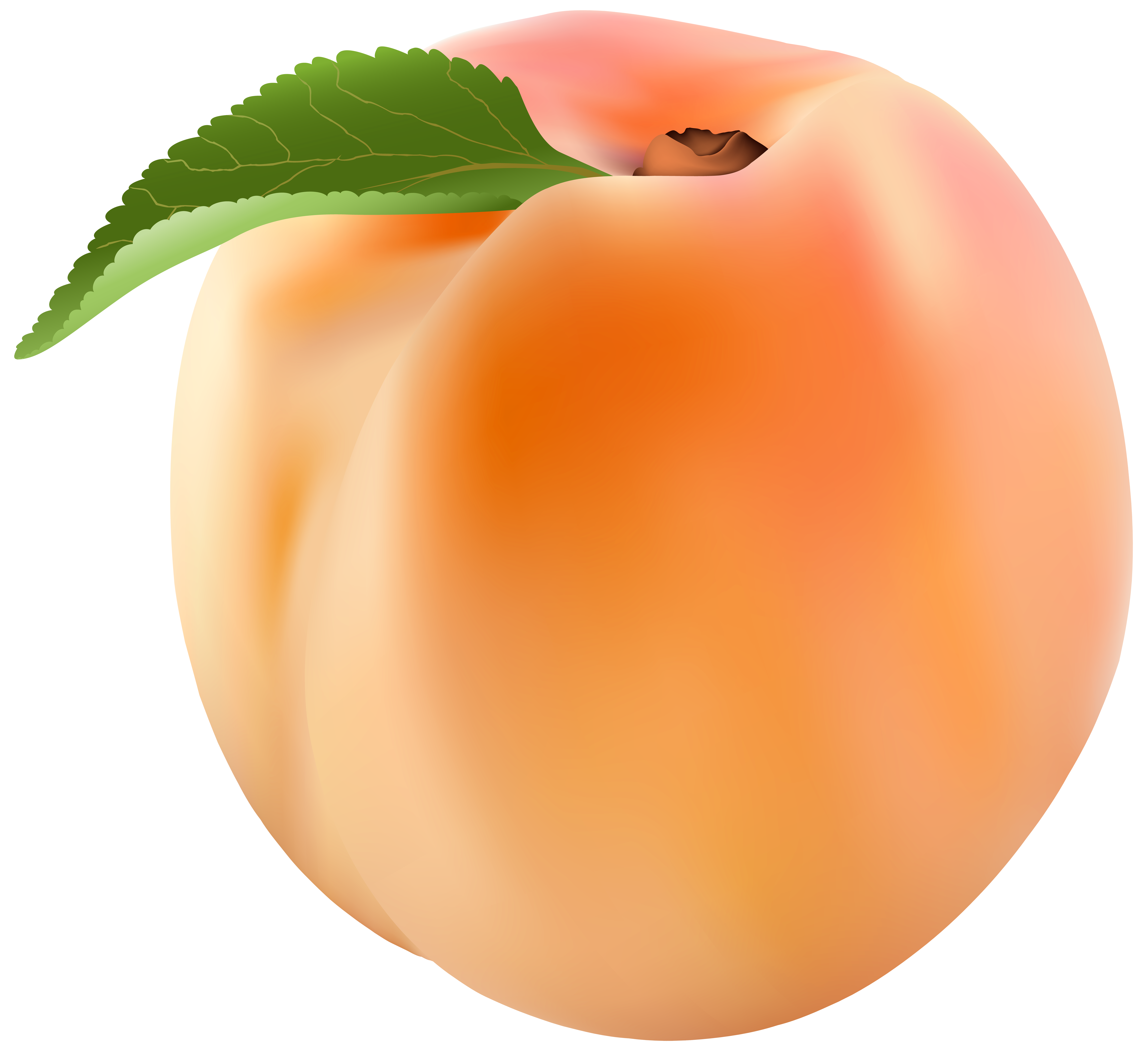 graphic transparent stock Peach png clip art. Peaches clipart orange food.