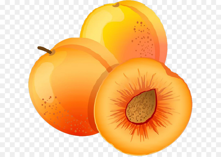 clip art transparent library Apricot fruit peach clip. Peaches clipart orange food.