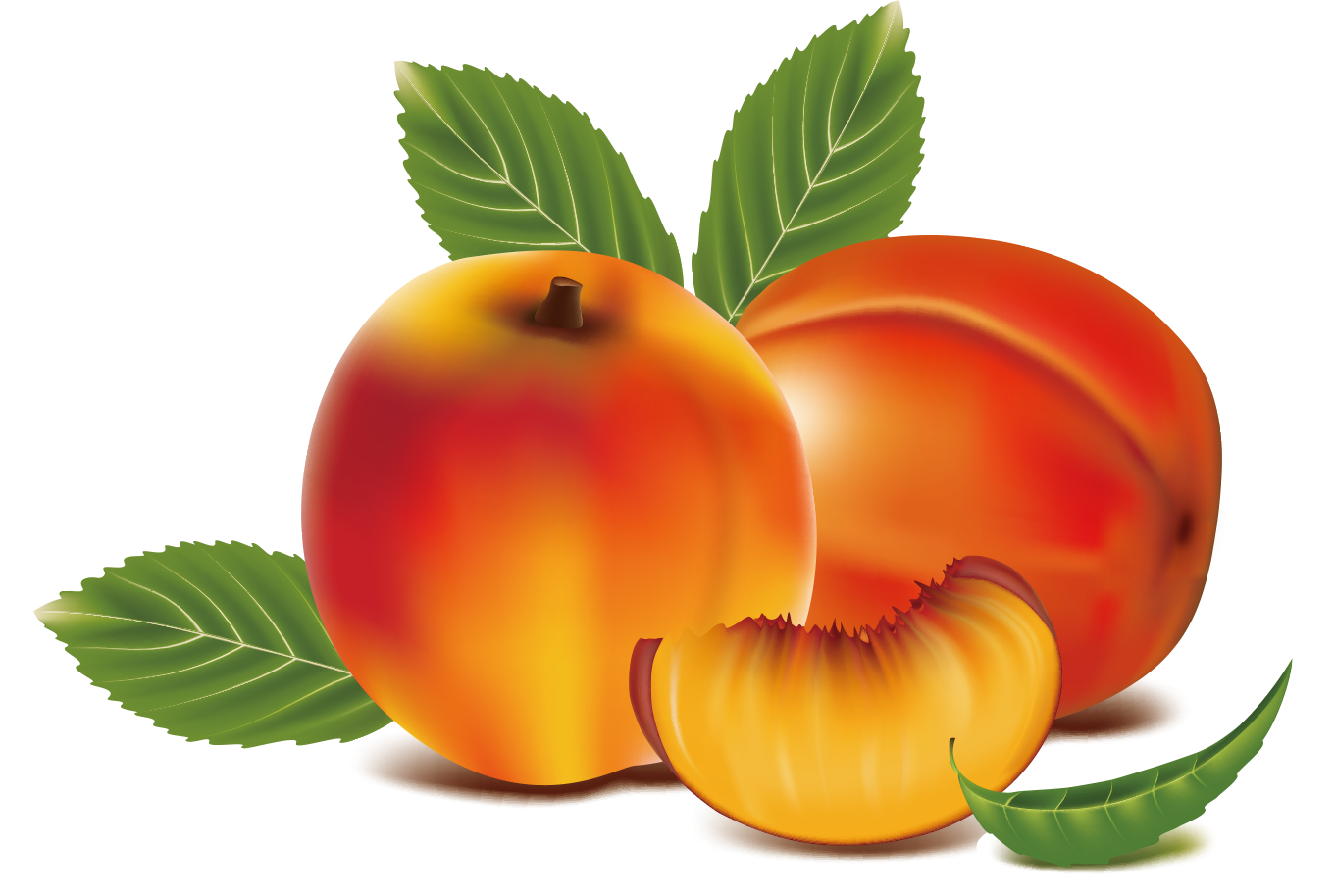 image library stock Peach fruit clip art. Peaches clipart orange food