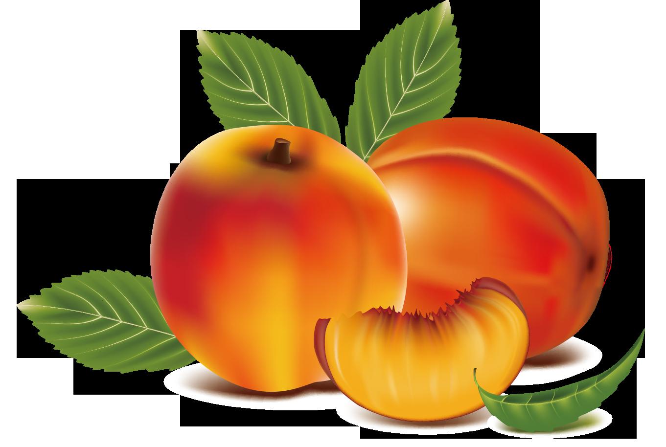 image library stock Peach fruit clip art. Peaches clipart orange food.