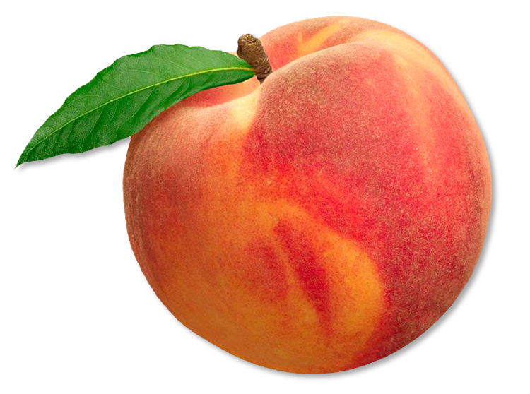 vector transparent Picking Peaches