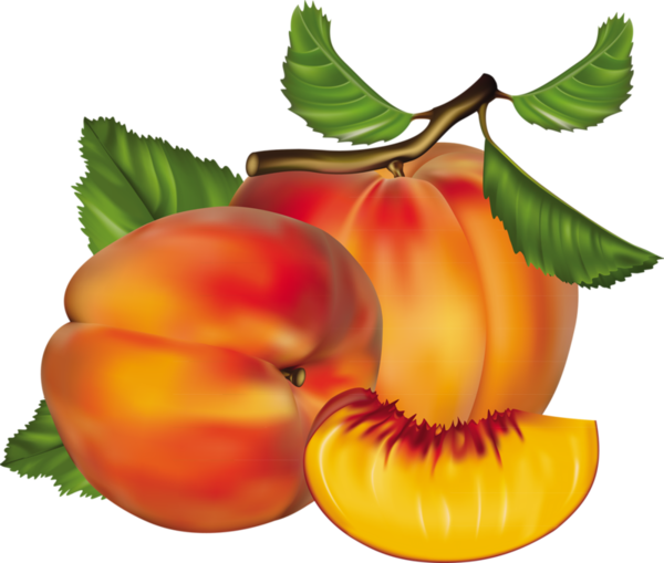vector transparent Peach Clipart at GetDrawings