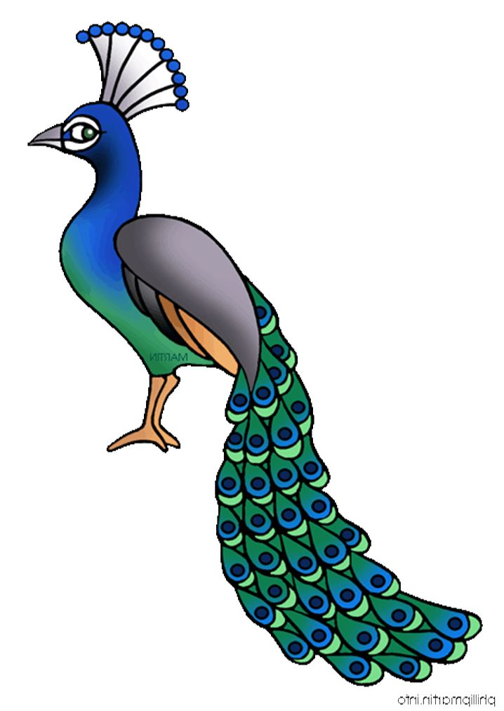 clipart transparent stock Free download clip art. Peacock clipart.